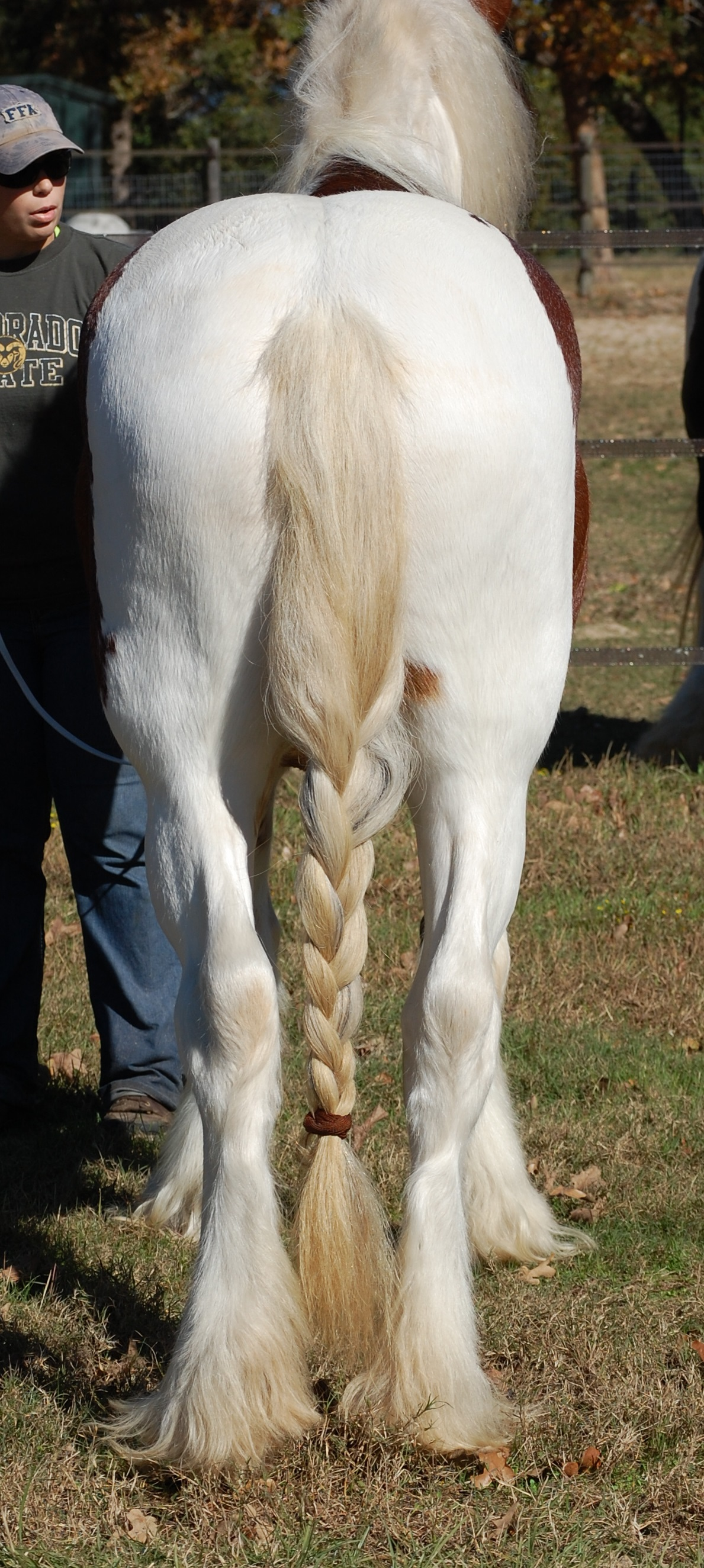 Horse Feathers Theo ::...