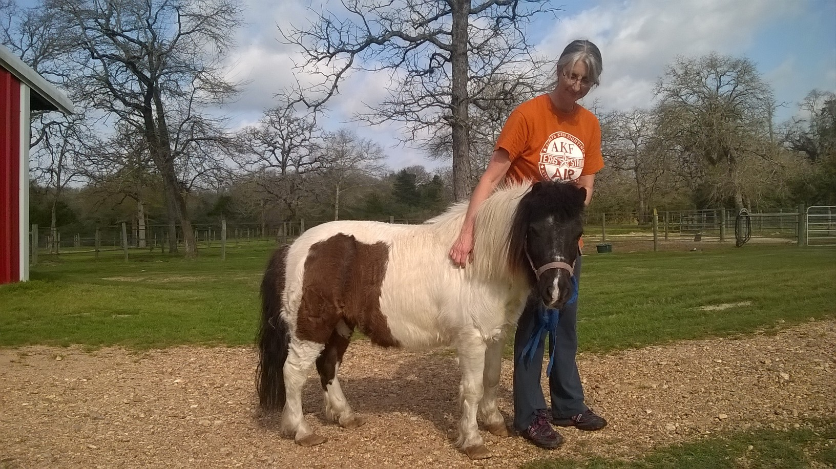 Uncategorized Picture Of A Pony the windmill gang horse feathers farm sid pony adorable little gentleman of a who was rescued in spring 2017 he now as family his own with plenty kids to fuss over